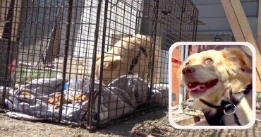 Его бросили. Он никому не верил... Чтобы помочь псу, пришлось использовать клетку и ... любовь!