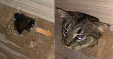 Берегись ремонта! Как кот решил хозяину помочь, но оказался замурованным В ЛЕСТНИЦЕ! :)