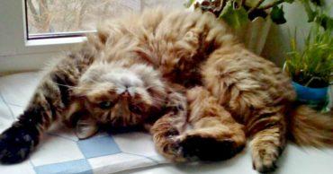 Дачники уехали, а кошка осталась... 2 года Белочка скиталась по деревням, пока ей не улыбнулась удача!