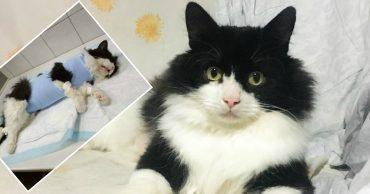 «Никто не заметил проблемы!» Мужчина подобрал кота, отдал ему свою комнату, но жизнь бедолаги висела на ниточке...