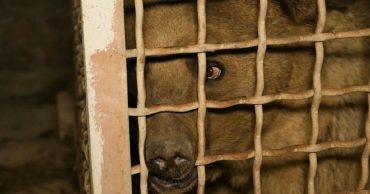 """""""Он боялся света, но тянулся нам навстречу!"""" В Армении освободили самого грустного складского медвежонка..."""