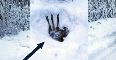 Три ноги торчало из-под снежной глади... Мужчина остановил грузовик и принялся копать!