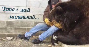 «Я буду твой котёнок...» Медведя с неизвестной болезнью замучили ветеринары - и теперь он ищет утешительных обнимашек!