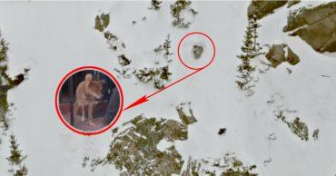 Пёс застрял над обрывом... Люди уехали, опасаясь лавины, но маленький борец вырыл себе спасительную пещеру!