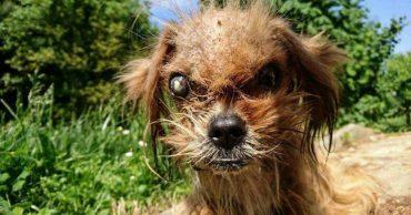 """""""Да это же чудовище!""""- думал каждый, кто обходил стороной этого хорватского щенка. А чудовище взяло и превратилось в Солнце)"""