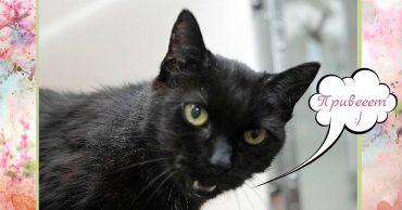 Хозяйка оставила Руби и рванула в Австралию. В отместку ей чёрная кошка научилась... разговаривать!