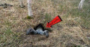 А вы знаете, как выглядит медвежья берлога ИЗНУТРИ? Охотник нашёл лаз и решил проверить...
