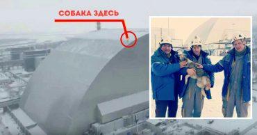 Пленник саркофага! В забытом Чернобыле собака забралась на 100-метровую крышу, а слезть не смогла...