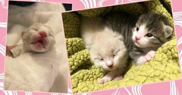 Женщина нашла у дома белого котёнка… А через 2 дня появилась кошка и оставила ей второго!
