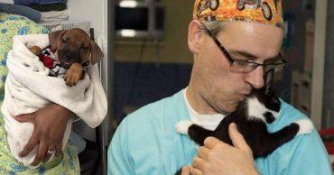 Колыбельная после операции! Врачи приюта баюкают животных, чтоб им не было страшно...