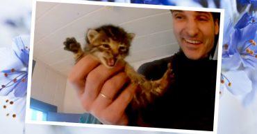 Что могут делать зооспасатели в массажном кабинете 2,5 часа? Правильно! Спасать маленького котёнка :)