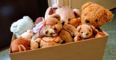 Женщина выносила из гаража коробку со старыми игрушками... И одна из них вдруг зашевелилась!