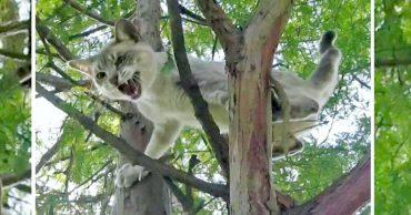 Этот супер-спасатель приезжает по первому звонку: посмотрите, на что он готов ради кошек!