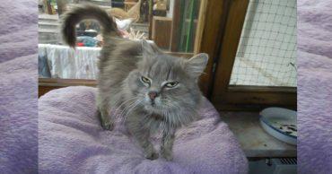 Старенькая кошка оказалась на улице, где не умела выживать... И тут о ней узнала семья из Германии!
