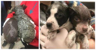 Поздний час, но ветеринары не уходят домой... Они спасают щенков, на которых хозяин вылил контейнер латексной краски!