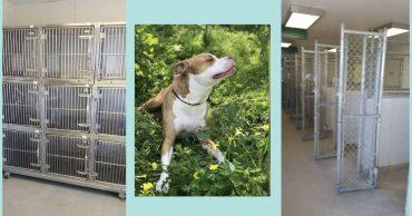 """""""Это была последняя собака!"""" Приют опубликовал фото с пустыми клетками - ВСЕХ животных разобрали!!!"""