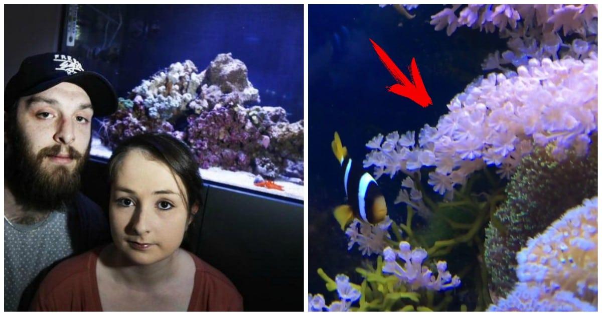 koralli opasni