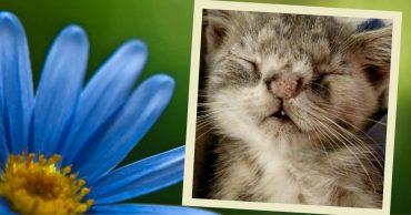 Испуганные глазки, торчащий зубик...  На ступеньках медпункта сидел котёнок и ловил своё Счастье!