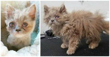 Котёнок, найденный в кустарнике, был похож на несчастного совёнка... Но превратился в обаятельную принцессу! :)