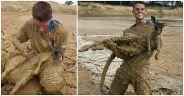 """""""На поверхности торчали только уши..."""" Подросток нырнул в болото, чтобы спасти кенгурёнка!"""