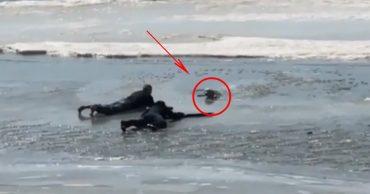Пёс бежал за птичкой и угодил под лёд... Трое парней рискнули жизнью, чтобы его спасти!