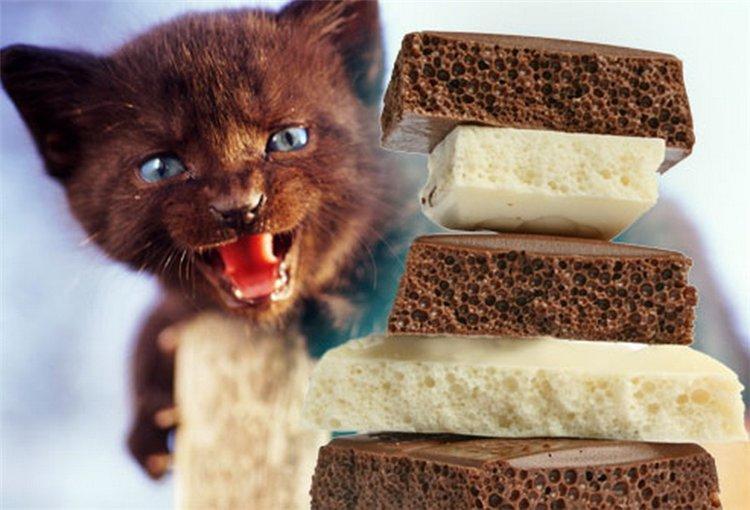 Shokolad--vkusnyatina-ili-sredstvo-ot-vseh-bolezney