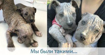 2 больных щенка превратились в красавчиков всего за месяц! Их судьба теперь решена...