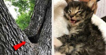 Котят забросили в дупло! Среди едва не погибших малышей был будущий могучий ЛЕВ...