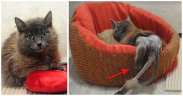 Она ползла к людям на животе! Вы обрадуетесь, увидев кошку, которая смогла :)