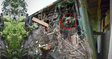 Золотистый ребёнок жил в мешке мусора 10 лет! Его владельцы вызвали спасателей от отчаяния...
