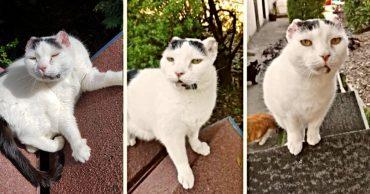 Белые кошки в опасности! Пинна грелась на солнышке, не зная, что нужно бежать...