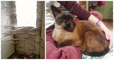 """""""Красивые кошки в страшной квартире... Хочу это забыть!"""" + 10 фото красивых спасённых котов"""