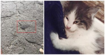 Котёнок в красных пятнах лежал у порога. Парень повёз усыпить страдальца... и привёз обратно!)