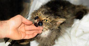 """""""Пришейте мне счастье, крепко-накрепко..."""" История кота Киш-Миша, который всё преодолел!"""