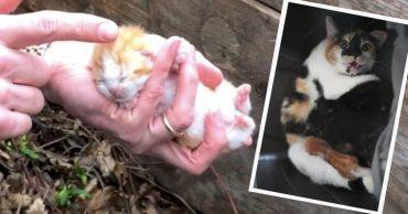 """""""Про котят мы узнали случайно..."""" Дикая кошка не хотела отдавать малышей, спрятанных под стеной!"""