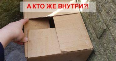 Утром на пороге стояла картонная коробка... Женщина никак не ожидала найти внутри ТАКОЕ!