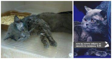 Под дождём в коробке свернулась чья-то тень... А через пару месяцев породистый кот стал звездой TV!
