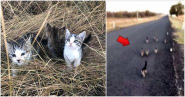 Котомафия существует! 10 бездомных котят преследуют девушку с собакой - и вот что те с ними делают...