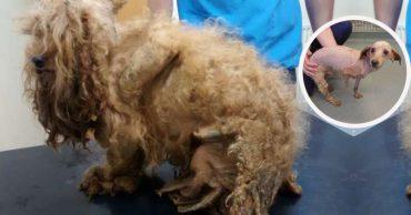 Дети грели своими рубашками несчастного пса! Но никто не заметил, что скрывалось под висящей шерстью...