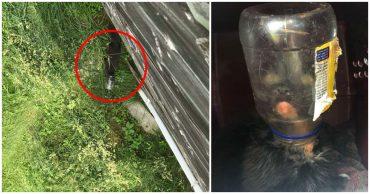 Кот под майонезом! Люди спасли неуловимого зверя, застрявшего в банке, но он их не полюбил...