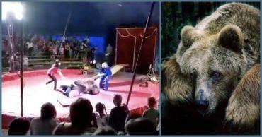 """""""Он даже спрятаться не мог!"""" Питерский цирк приехал в село и показал такое """"шоу"""", что зрители с криками разбежались!"""