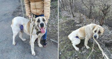 Она умирала от голода рядом с неподвижными щенками! Омские волонтёры бросили все силы на её спасение...