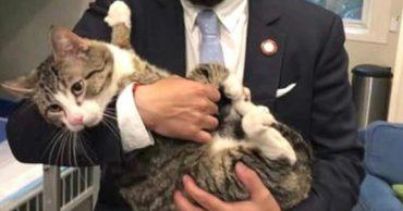 На трассе сидел растерянный кот... Все ехали мимо, и только нью-йоркский политик остановился помочь!
