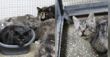 """""""У меня нет денег их стерилизовать!"""" В квартире женщины нашли 76 котов в плачевном состоянии..."""