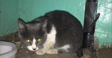Кто-то кормил её, а кто-то гнал пинками прочь... Пока несчастную кошку не заметила добрая семья!