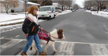 А как насчет лошадки? Во Франции решили использовать пони в качестве поводырей - и вот что из этого вышло...