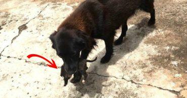 Собака рылась в мусорном контейнере... Когда парень понял, что случилось, то схватился за телефон!
